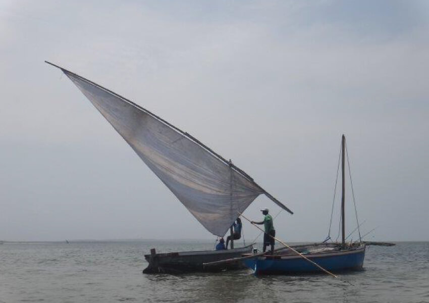 Dhow Trip